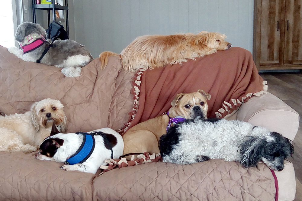 Dog Daycare and Cat Daycare